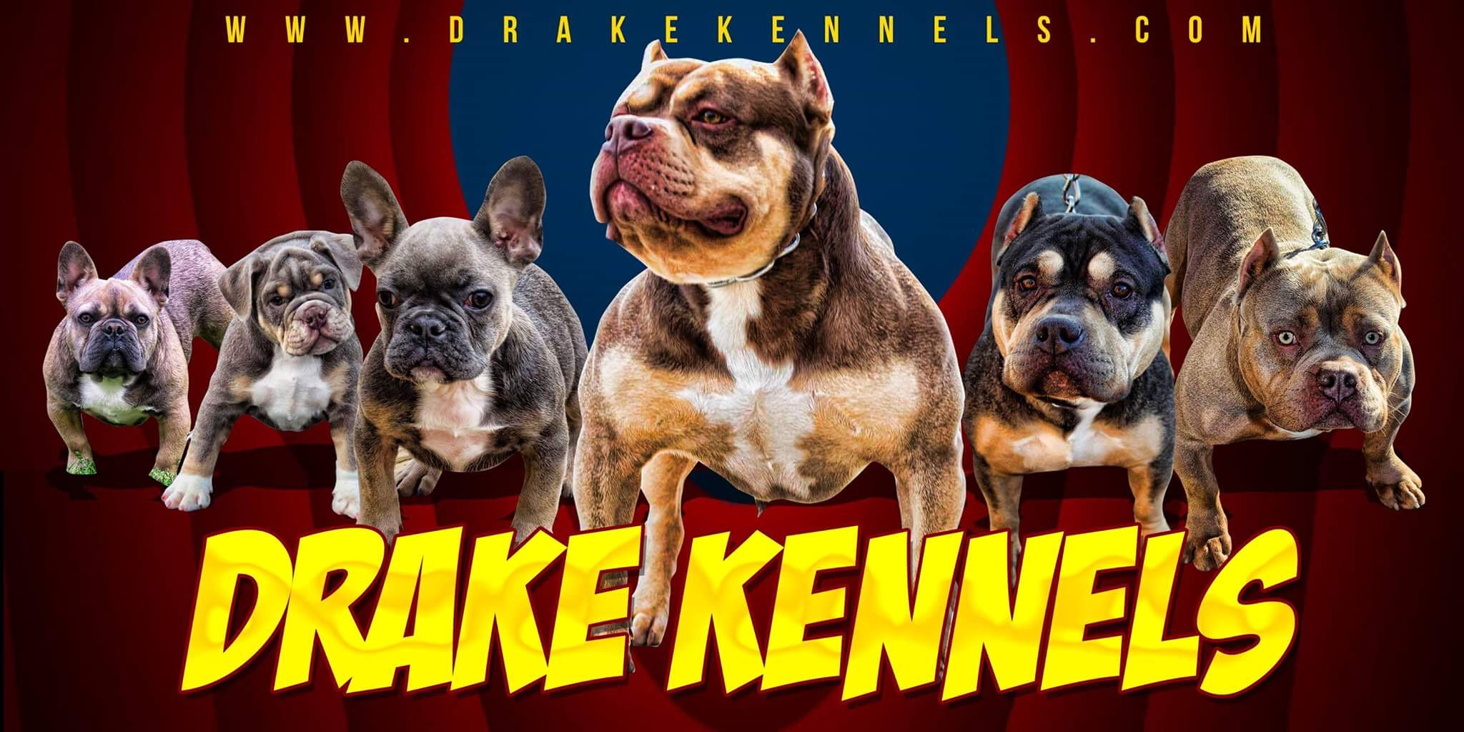 Puppys For Sale Bullies Drake Kennels Charlotte Nc